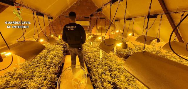 ALBARREAL DE TAJO | Dos detenidos y 385 plantas de marihuana incautadas