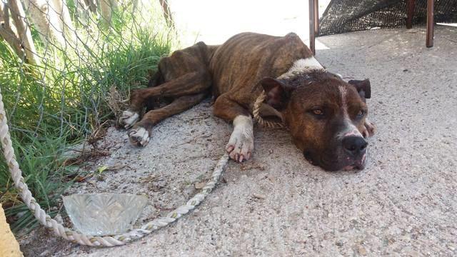 La Policía Local de El Casar rescata a un perro gravemente herido