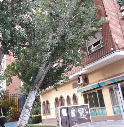 Susto tremendo en Talavera por la caída de un árbol sobre un edificio