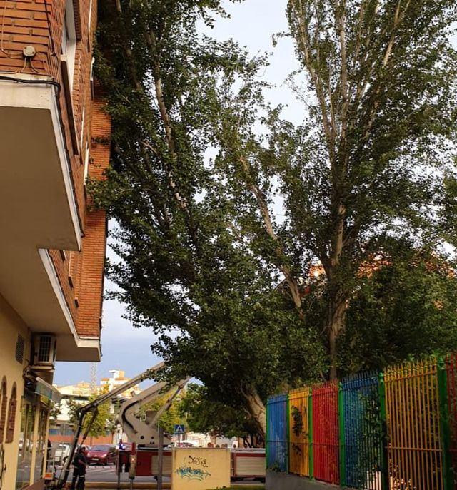 Fotos de la caída de un árbol de grandes dimensiones en Talavera