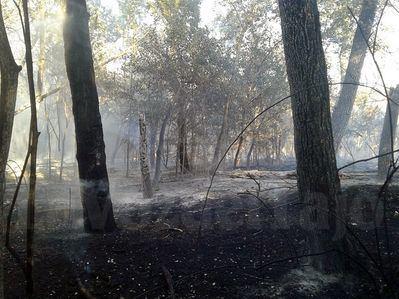 Los trabajos de control del incendio de la isla del Tajo no cesaron hasta la madrugada