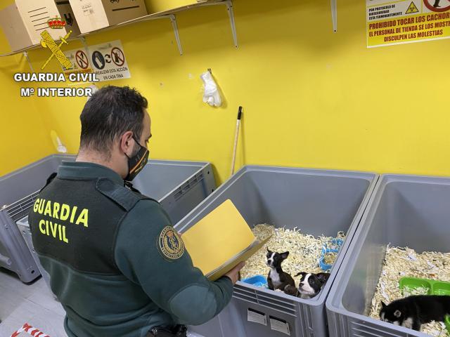 TOLEDO | La Guardia Civil detiene a 5 miembros de una red dedicada a la venta de cachorros de perro enfermos