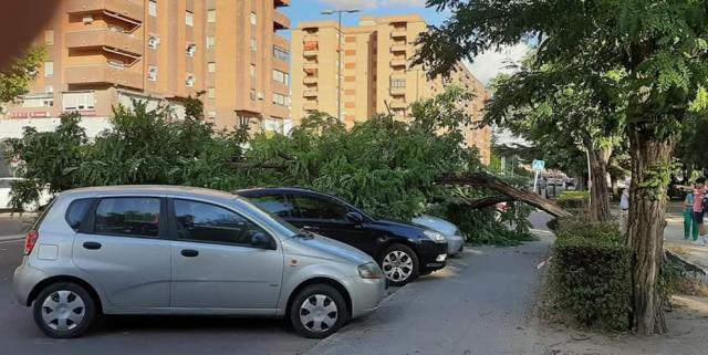TALAVERA | Un árbol cae sobre los coches en la avenida Juan Carlos I