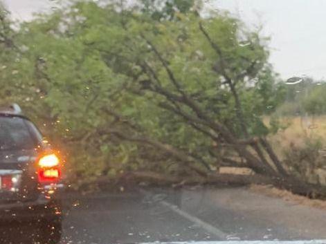 Una tormenta derriba ramas y un árbol en Talavera