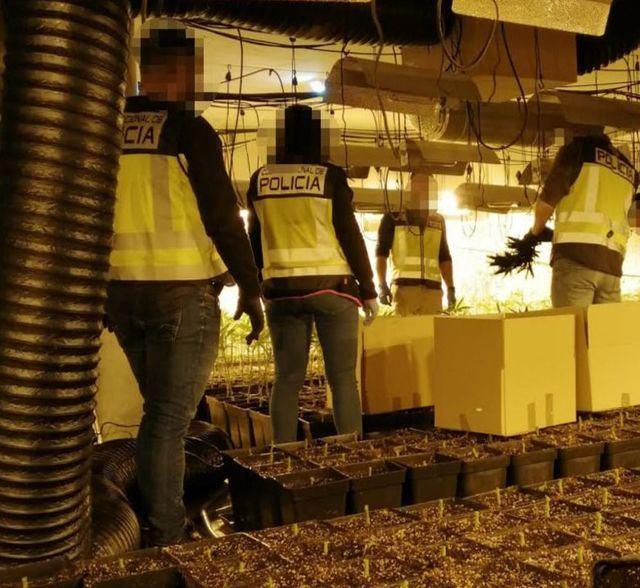 Nuevo golpe al cultivo de marihuana en la provincia de Toledo