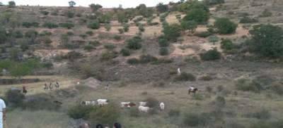 Atendidas siete personas en los encierros por el campo de Brihuega