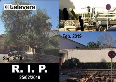 Otro árbol menos en Talavera, esta vez en la calle Herrerías