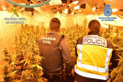 MARIHUANA | 5.500 plantas incautadas y seis personas detenidas