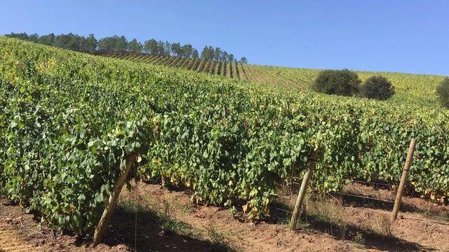 AGRICULTURA | ASAJA advierte del