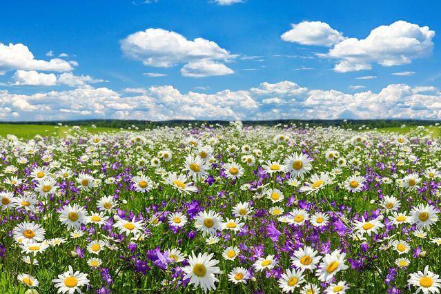 EL TIEMPO | Ya está aquí la primavera