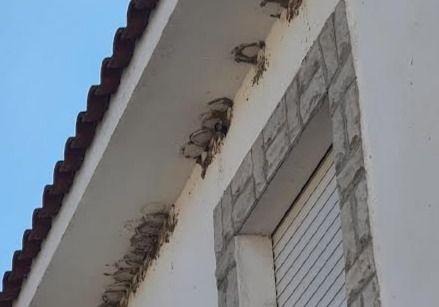 TALAVERA Y CEBOLLA   Ardeidas denuncia la destrucción de cien nidos protegidos