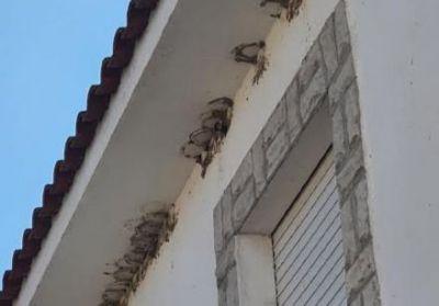 TALAVERA Y CEBOLLA | Ardeidas denuncia la destrucción de cien nidos protegidos