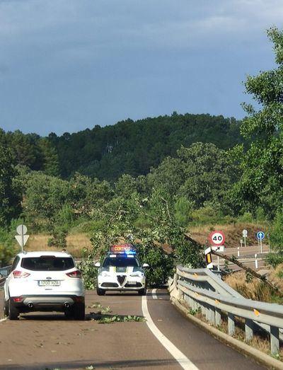¡Cuidado! Un árbol caído impide la correcta visibilidad en un tramo de la N-502