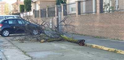 BORRASCA | El fuerte viento tiene consecuencias en Talavera