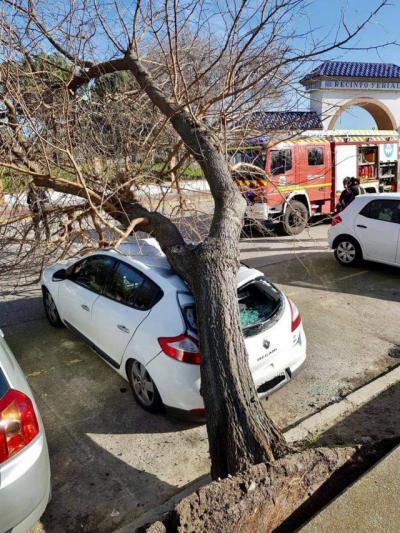 TALAVERA | El fuerte viento tira un árbol sobre un coche en el Ferial