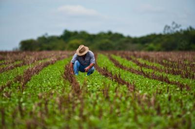 Los agricultores de CLM tienen hasta el 30 de abril para solicitar la PAC