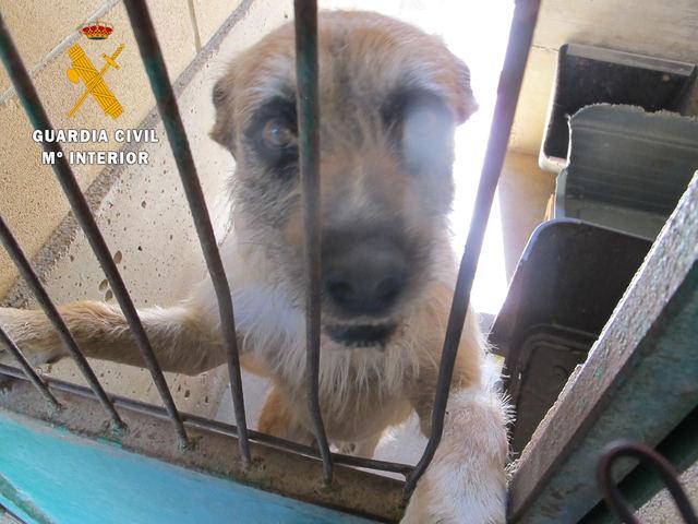 CLM | Investigado por un presunto delito de maltrato animal