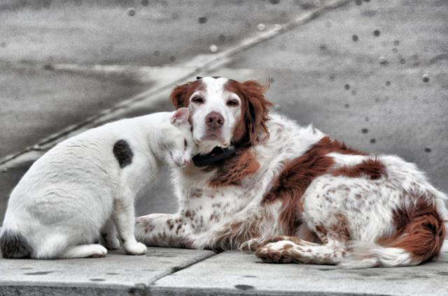 Los veterinarios alertan: 138.000 perros y gatos fueron abandonados en España en 2018