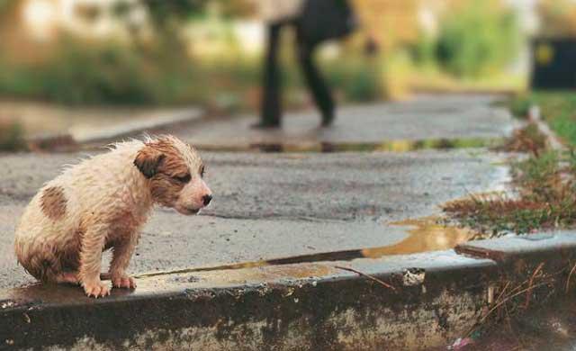 CMM emitirá un especial para concienciar sobre el abandono de mascotas
