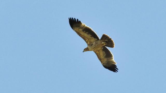 Ecologistas denuncia el envenenamiento de 10 rapaces en un coto de caza de Valmojado