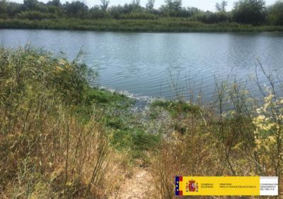 La CHT identifica y retira plantas de camalote en un tramo del Tajo en Talavera