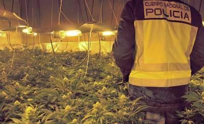 Detenidos una madre y un hijo por tener en casa 110 plantas de marihuana