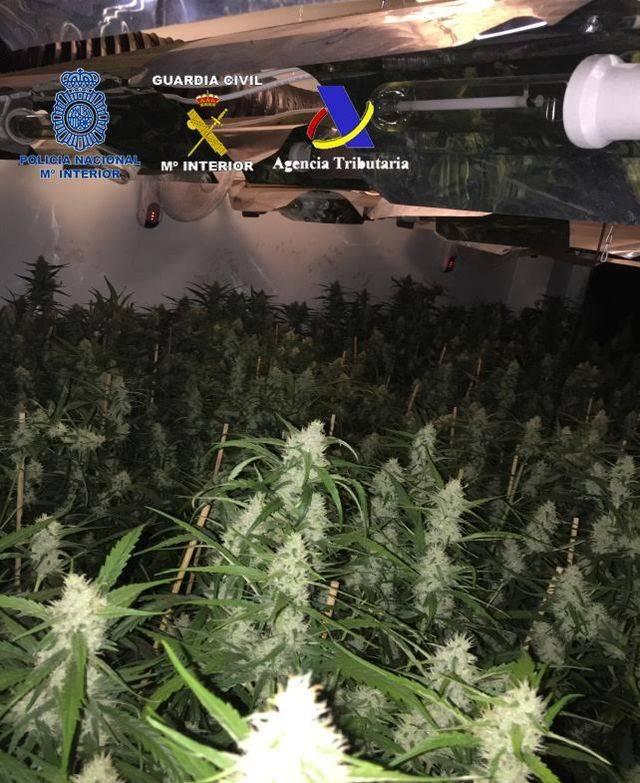 Desarticulado un grupo criminal dedicado al cultivo de marihuana para su exportación a Reino Unido