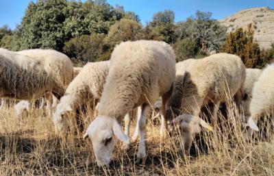 CLM adelanta el pago y abona este viernes más de 26 millones de ayudas para agricultura ecológica y pastoreo