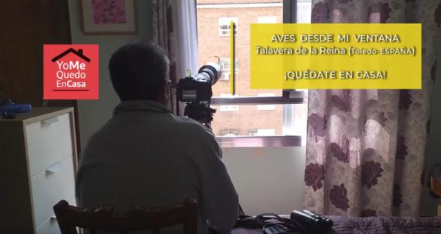 VÍDEO | 'Aves desde mi ventana', en Talavera de la Reina