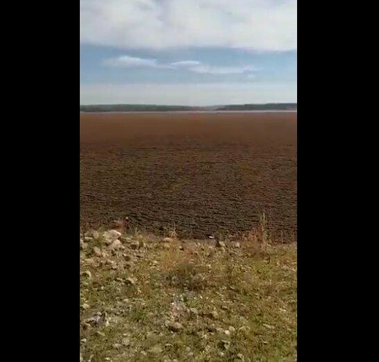 VÍDEO | La impactante imagen del Tajo por culpa de una planta invasora
