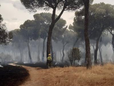 Controlado el incendio de El Tiemblo después de arrasar unas 800 hectáreas