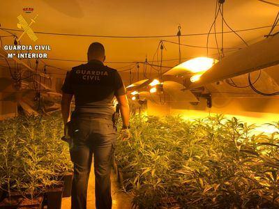 La Guardia Civil detiene a tres personas e incauta 443 plantas de marihuana en Carmena
