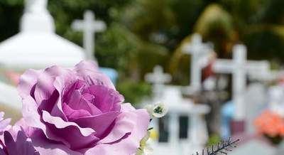 Estas son las flores más vendidas en CLM por el Día de Todos los Santos