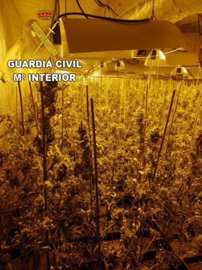 MARIHUANA | Un detenido por cultivo de estupefacientes y defraudación de fluido eléctrico en un pueblo de Toledo