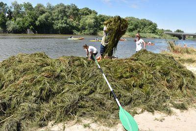 TALAVERA   Más de 600 kilos de algas retiradas y una tonelada de basura recogida (fotos)