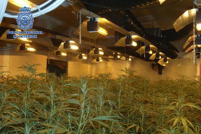 Desmantelado un cultivo ilegal de marihuana asentado en una nave industrial de Toledo