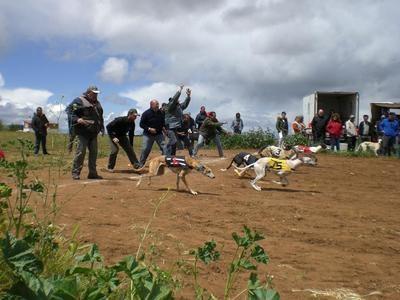 'Una mañana de perros' en San Martín de Montalbán