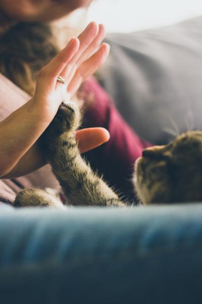 La tenencia responsable de mascotas nos hace más humanos
