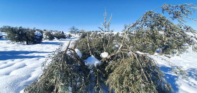 CAMPO | Los agricultores piden ayudas excepcionales por los daños de Filomena
