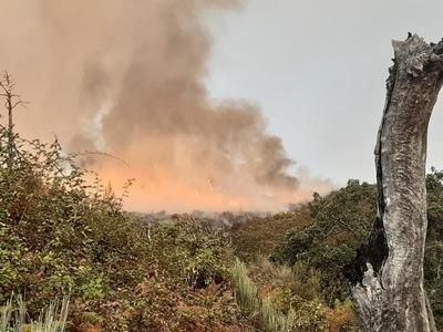 Trabajan en la extinción de un incendio en Villanueva de la Vera