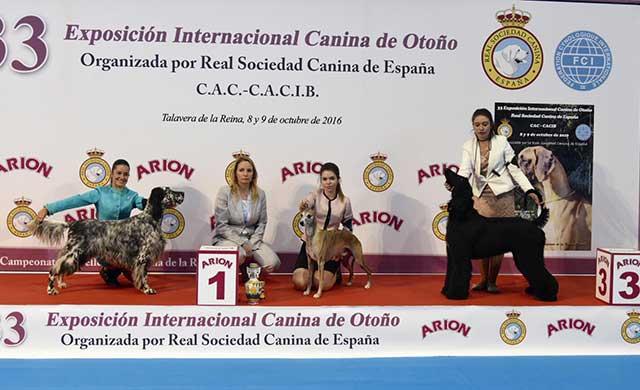 Macarena Rueda, mejor presentador joven de la 33 Exposici�n Canina