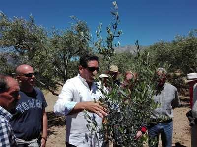 San Esteban del Valle se preocupa seriamente por los problemas del olivar