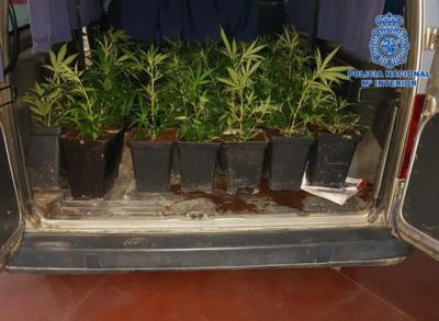 MARIHUANA | Pillados padre e hijo mientras descargaban 62 plantas
