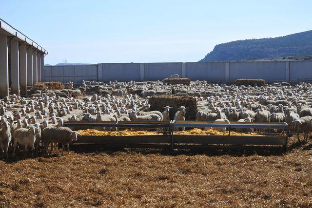 Sector ovino | JCCM