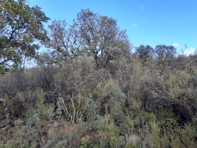CLM | 230.000 euros en ayudas para la conservación de la Red Natura