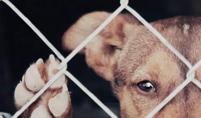 Ley de Bienestar Animal de CLM quiere incrementar las sanciones por maltrato animal