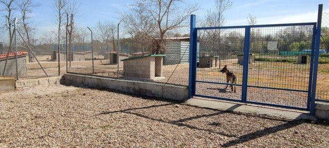 TALAVERA | 'Reforma integral' en el Centro Municipal de Acogida de Animales