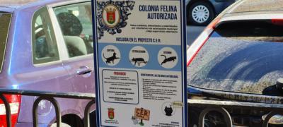 El Ayuntamiento instala nuevos comederos para colonias felinas
