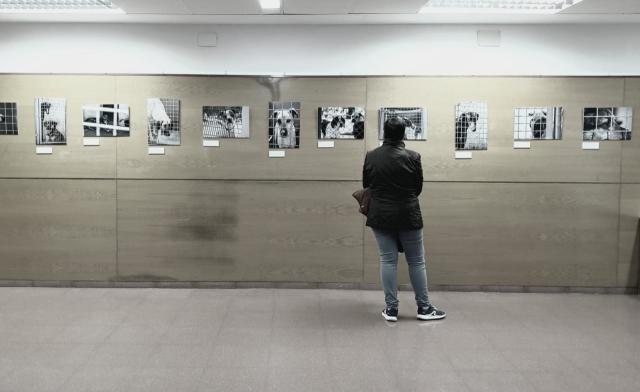 Un total de 27 fotografías integran una exposición en Toledo para concienciar sobre el abandono de animales