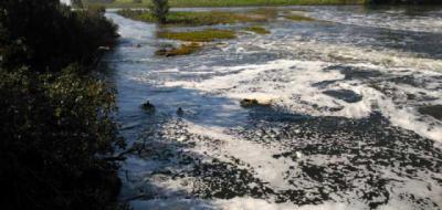 El Tajo contaminado por plaguicidas tóxicos que afectan a la salud humana y animal